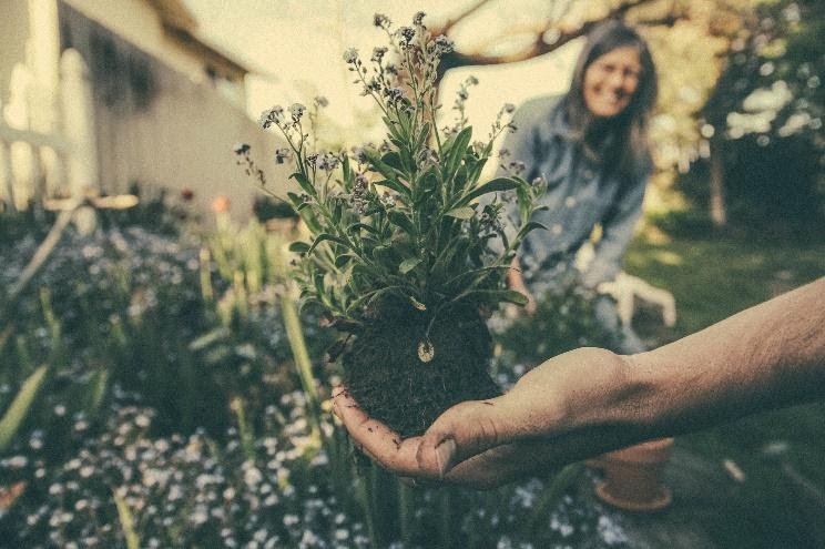 5 tips voor als je een tuin wilt aanleggen